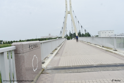 紫陽花_散歩1