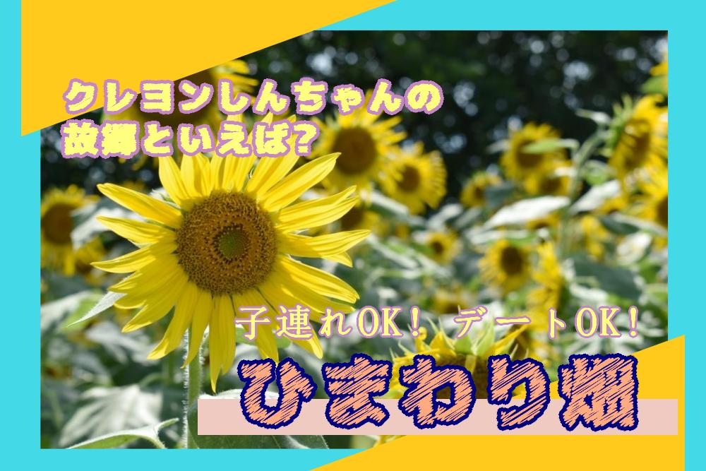 ひまわり_タイトル