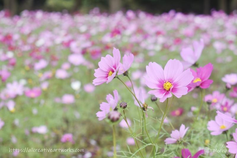 花の丘_見頃