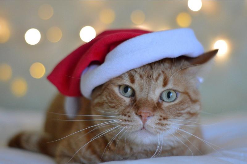 クリスマス_サンタ